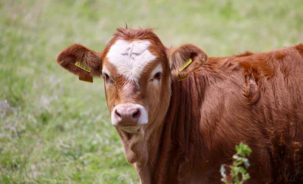 溯牛养殖会员 入会细则